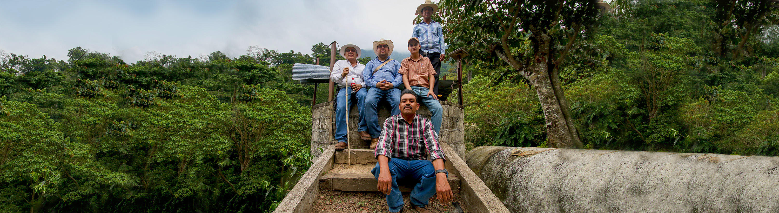 Harvesting Coffee in Mexico___